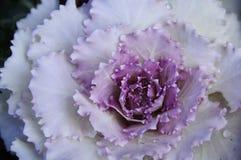 L'automne coloré fleurit des regards très beaux image libre de droits