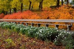 L'automne a coloré les buissons avec les feuilles lumineuses et le banc en bois en parc de ville photo stock
