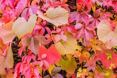 L'automne coloré pousse des feuilles disposition Photos libres de droits