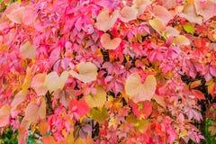L'automne coloré pousse des feuilles disposition Image libre de droits