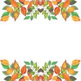 L'automne coloré s'embranche la frontière 3 Photos libres de droits