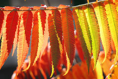 L'automne colore des lames Images stock