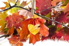 L'automne d'amour avec un coeur a coupé en feuille Photo stock