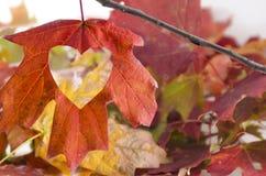 L'automne d'amour avec un coeur a coupé en feuille Photos stock