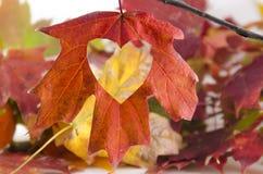 L'automne d'amour avec un coeur a coupé en feuille Images stock