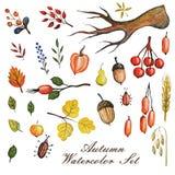L'automne d'aquarelle s'embranche avec des feuilles, Apple, poire Image libre de droits