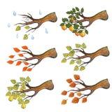 L'automne d'aquarelle s'embranche avec des feuilles, Apple, poire Images stock