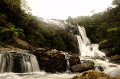L'automne de Baker dans Sri Lanka photos stock