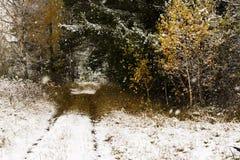 L'automne de confrontation à l'hiver sur un chemin forestier Photos libres de droits