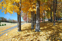 L'automne de Helen Image stock