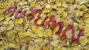 l'automne de mot écrit dans des feuilles rouges Photo stock