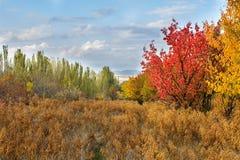 L'automne de paysage d'automne colore le panorama Images libres de droits