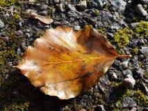 L'automne est ici photographie stock libre de droits