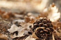 L'automne est ici Image libre de droits