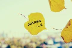 L'automne est venu le concept Photos libres de droits