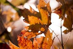 l'automne a laissé Photo libre de droits