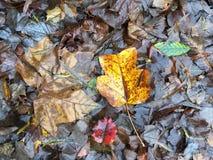 l'automne laisse humide Images stock