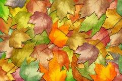 L'automne laisse le fond Images stock