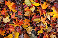 L'automne laisse le fond photographie stock