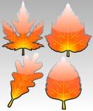 L'automne lustré pousse des feuilles vecteur Photographie stock libre de droits