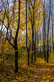 L'automne marche en parc Images libres de droits