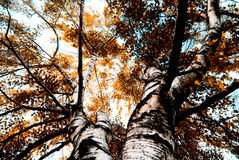 L'automne orange Image stock