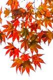 L'automne pousse des feuilles des arbres aux Pays-Bas image stock
