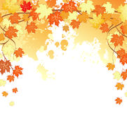 L'automne pousse des feuilles en arrière Images libres de droits