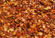 L'automne pousse des feuilles fond Photos stock