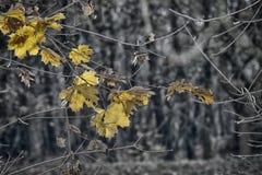 L'automne pousse des feuilles fond Images stock
