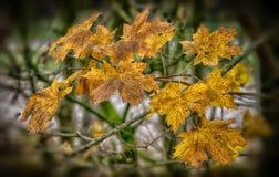 L'automne pousse des feuilles fond Photographie stock libre de droits
