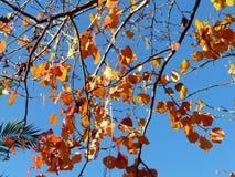 L'automne rouge de feuilles vient Photographie stock