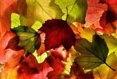 L'automne rouge, vert et d'or (chute) laisse la texture de fond photos stock