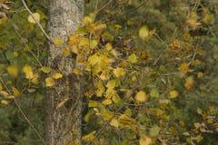 L'automne, ses arbres avec des feuilles de feuilles de couleurs nature de vert de couleur de beauté de fond Photo libre de droits