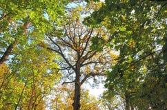 L'automne tôt Image libre de droits