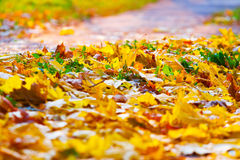 L'automne tombé part au sol, lumière de coucher du soleil Image libre de droits