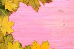 L'automne tombé part sur le fond de surface de conseil en bois avec l'espace de copie photo libre de droits