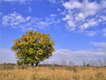 L'automne vient Photographie stock libre de droits