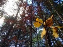L'automne vient Photos stock