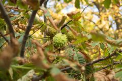 L'automne vient Images libres de droits