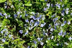 L'Autriche, Tyrol, botanique images stock