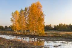 L'autunno è differente Immagine Stock