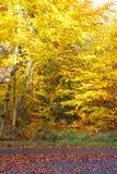 L'autunno è venuto immagini stock