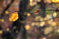L'autunno è venuto immagine stock libera da diritti