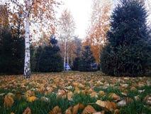 L'autunno è venuto Fogli di autunno gialli La caduta va dagli alberi sull'erba verde immagine stock