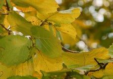 L'autunno è venuto in Russia fotografie stock libere da diritti