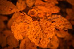 L'autunno fotografie stock libere da diritti