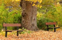 l'autunno benches la sosta Fotografia Stock