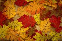L'autunno, caduta, fondo della caduta va Immagine Stock