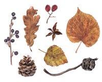 L'autunno, caduta va, bacche, pino, coni del cipresso illustrazione vettoriale